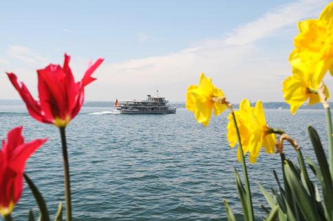 Bodensee Frühling