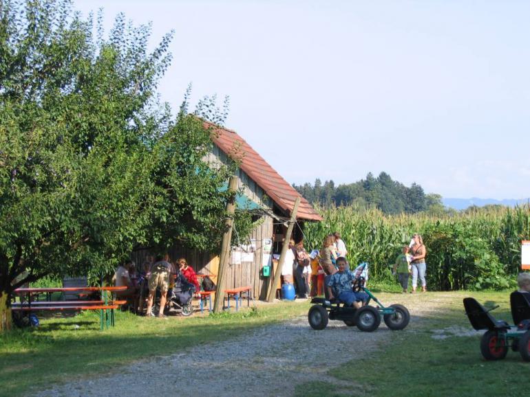 Maislabyrinth in Kressbronn